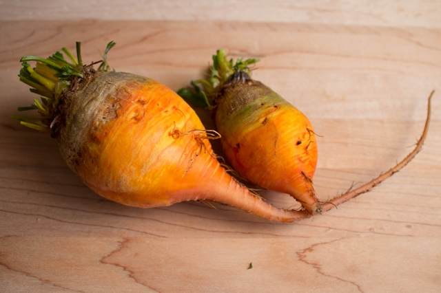 Golden Beet Root