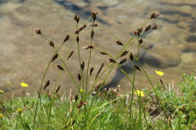 Waving Grass