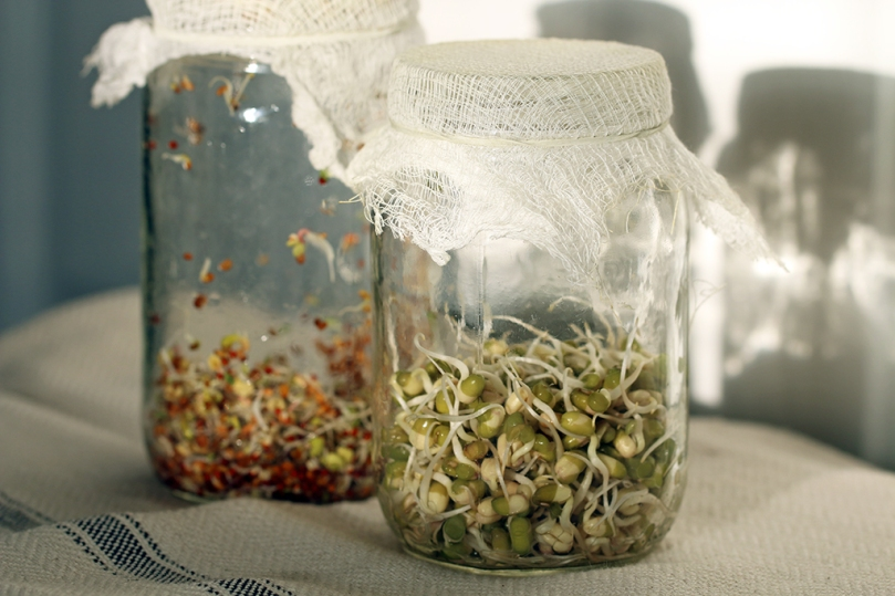 jar-sprouting-day4