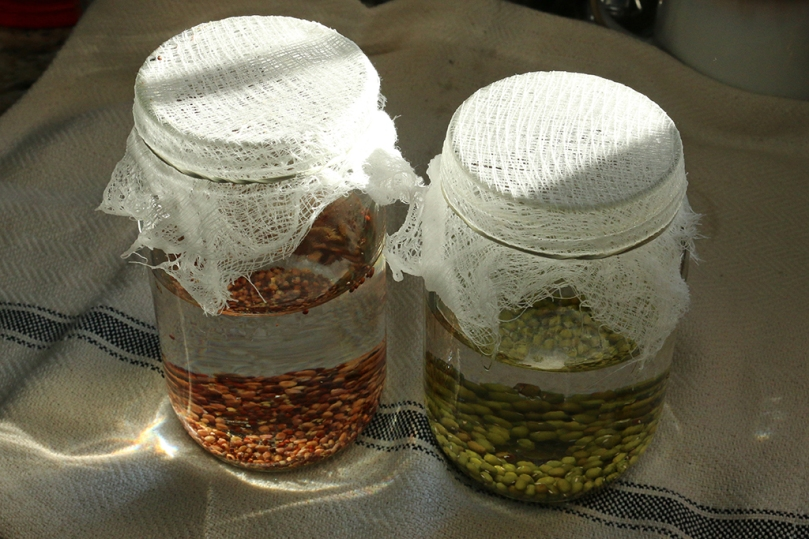 jar-sprouting
