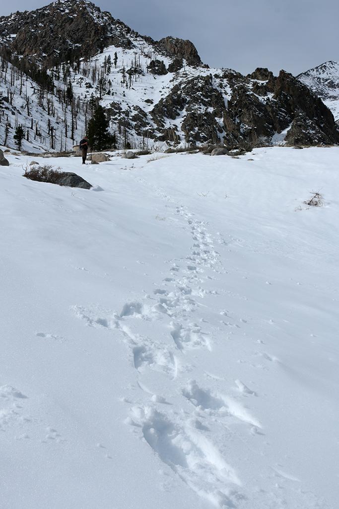 snowshoe-tracks