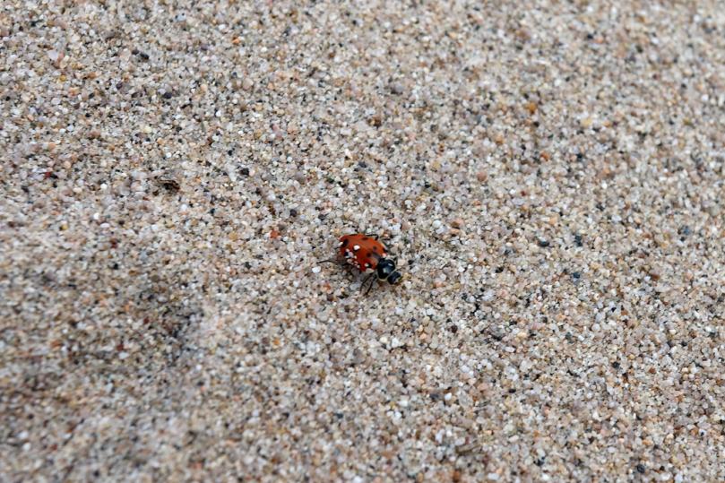 brave-beetle